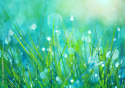 Stickers pour portes Vert corail Abstract green grass nature blurred background on meadow. Juicy lush grass on meadow with drops dew in morning light, outdoors. artistic image of purity freshness nature. close up. shallow depth