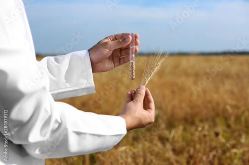 Fotomural  Agronomist holding test tube with wheat grains in field, closeup