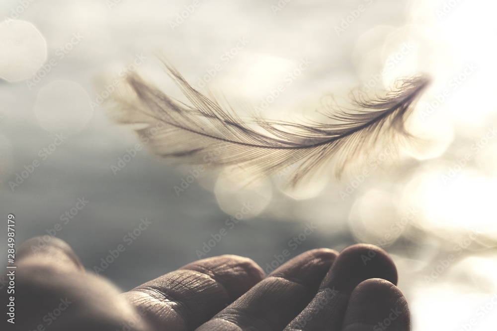 Fototapeta meeting between a delicate feather of a woman's hand