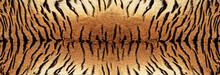 Tiger Skin Texture - Image