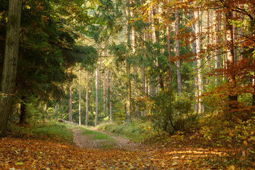 FototapetaRoad in a beautiful autumn forest
