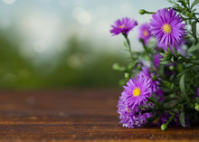 Spring Background, Purple Daisies On Wooden Table, Close Up