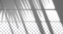Realistic Transparent Drop Shadow Of Window With Palm Branch On A Wall, Overlay Effect For Photo, Design Presentation. Vector Illustration