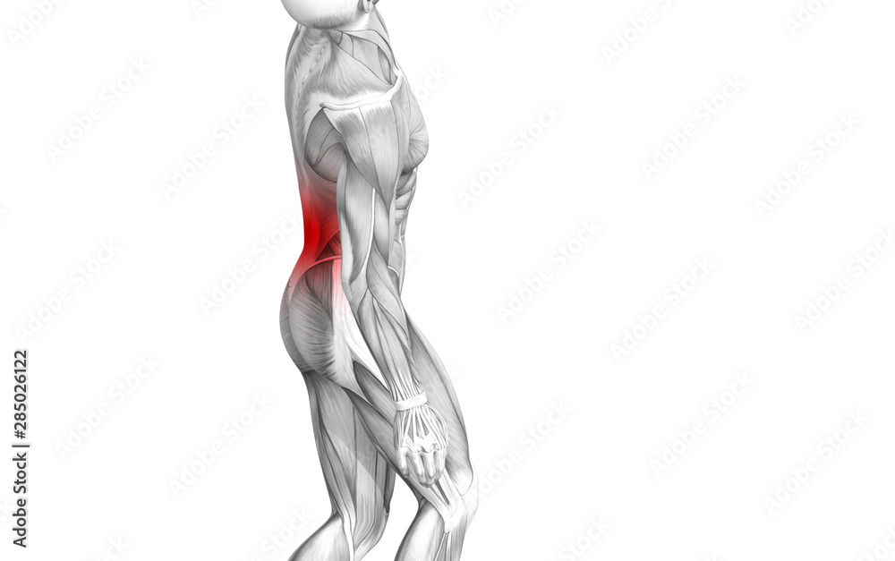 Fototapeta Conceptual back human anatomy with red hot spot inflammation articular joint pain or spine health care therapy or sport muscle concepts. 3D illustration man arthritis or bone sore osteoporosis disease