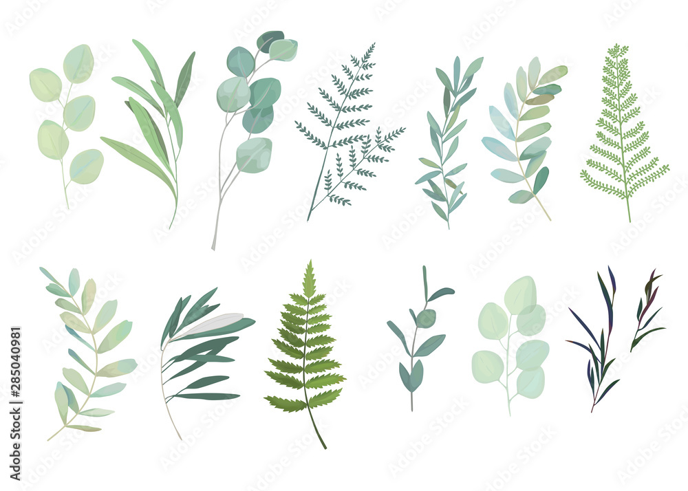 Fototapety, obrazy: Floral greenery set with eucalyptus, fern and olive branch. Vector illustration