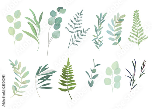 Fototapeta Floral greenery set with eucalyptus, fern and olive branch. Vector illustration obraz