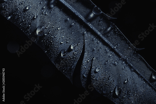 Photo Fragment of bird's feather with water drops, close-up