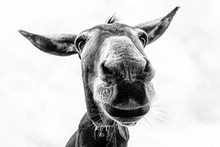 Donkey Head Close-up Taken By ...