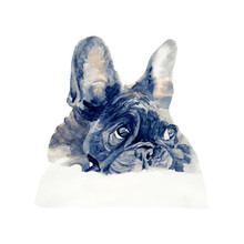 Bulldog Watercolor Isolated .French Bulldog On White Background. Watercolor Hand Painted Illustration Of   French Bulldog.
