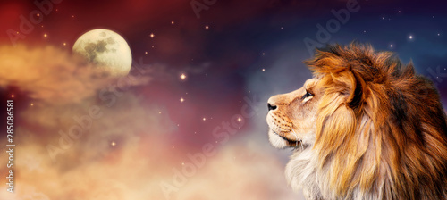 African lion and moon night in Africa banner Canvas