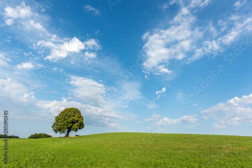 Photo Arbre sur une colline