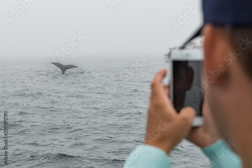 Valokuva  A young man takes a photo of a humpback whale tail with his mobile phone on a whale watching boat in the Atlantic Ocean off the Gloucester coast of Massachusetts