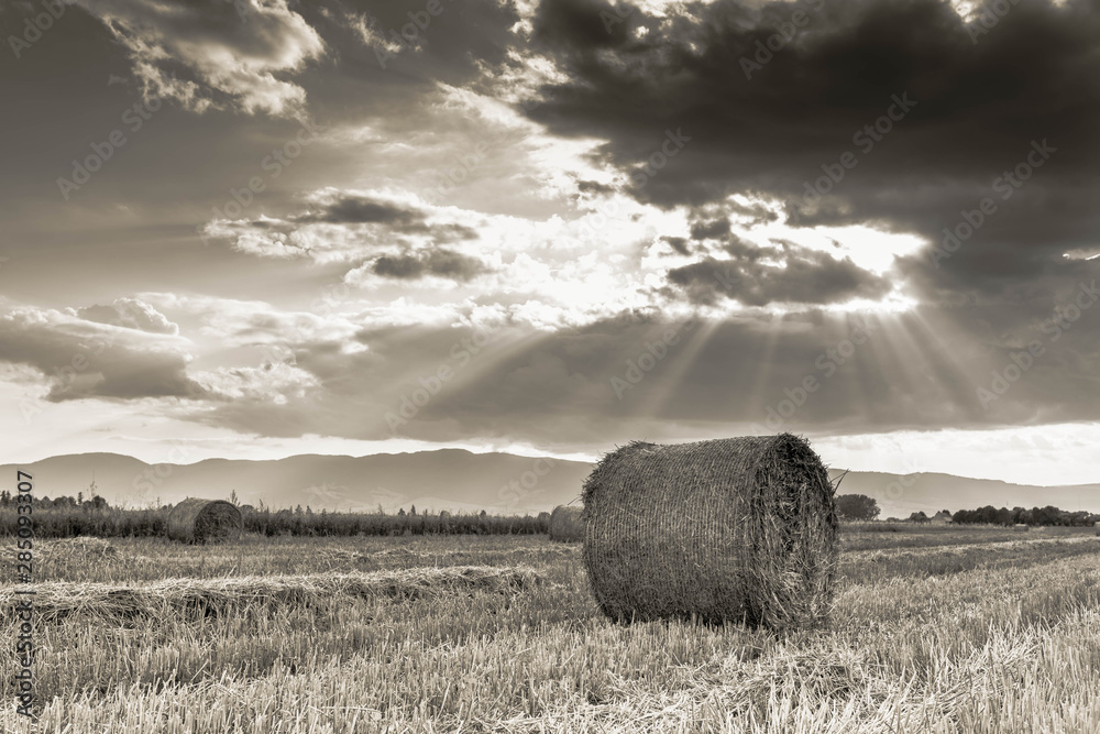 Fototapeta Agricultural landscape image, round hay bales on field, vibrant clouds with divine lights at sunset in black and white.