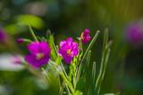 Fototapeta Kwiaty - Kwiaty