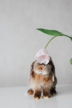 Adorable Bunny Sniffing Flower