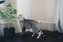 Cute Gray Cat Near Home Plant
