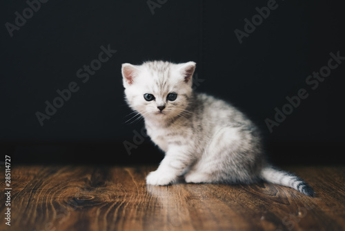 Adorable tiny kitten on floor