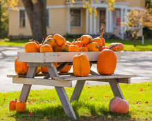 Pumpkins For Sale On A Picnic ...