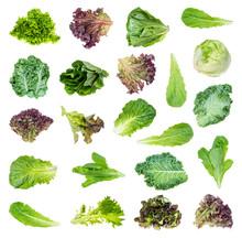 Set Of Various Fresh Lettuces ...