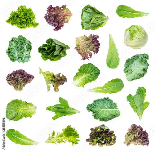 Obraz set of various fresh lettuces and kale cutout - fototapety do salonu