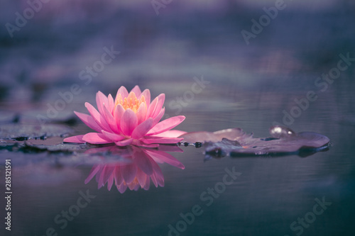 Foto auf Gartenposter Lotosblume Water Lily Floating On The Water