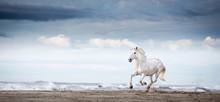 A White Stallion Galloping On A Beach