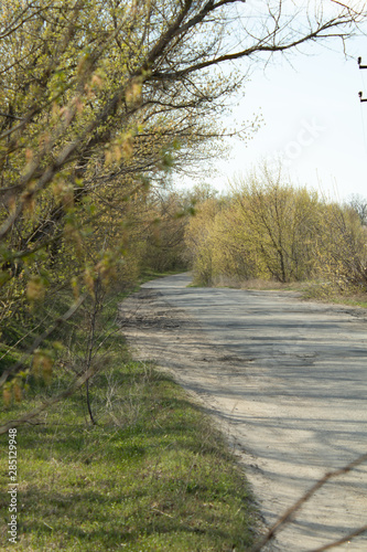 Foto op Canvas Weg in bos Asphalt road at the edge of the city, among shrubs and trees