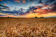 Beautiful summer sunrise over wheat fields