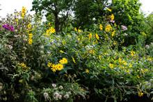 Native Wildflowers On The Prai...