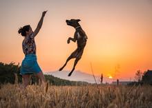 Young Woman Training Big Dog I...