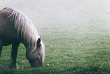 Head Of Amazing Horse With Chestnut Colored Coat Standing On Blurred Background Of Nature