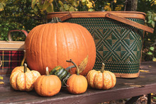 Pumpkins And Gourds On Picnic ...