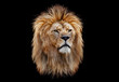 canvas print picture - Coloured lion head on a black background