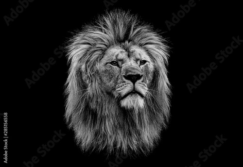 Fototapety, obrazy: Black and white head of a lion