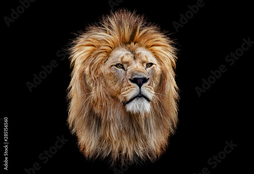 Foto auf Gartenposter Löwe Coloured lion head on a black background
