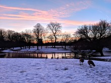 Park In Winter At Sunset With Geese