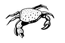 Crab. Stylized Line Drawing