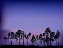 Group Of Pine Tree Silhouettes At Dark Blue Night
