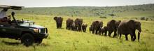 Line Of Elephants Passes Guest...