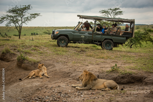 Male and female lion lying near truck