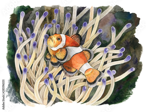 Photo Watercolor illustration of an orange clown fish on the background of actinium in the tropical sea