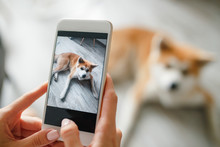 Close Up Woman Hands Holds A Smartphone And Takes A Picture Of  Dog. Woman Hand With Mobile Smart Phone Taking A Photo Of A Cute Akita Inu Dog Over White Background. Happy Dog Looking At The Camera