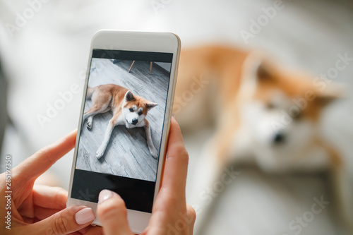Photo close up Woman hands holds a smartphone and takes a picture of  dog