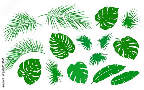 Fotografija  tropical set of green palm leaf branch