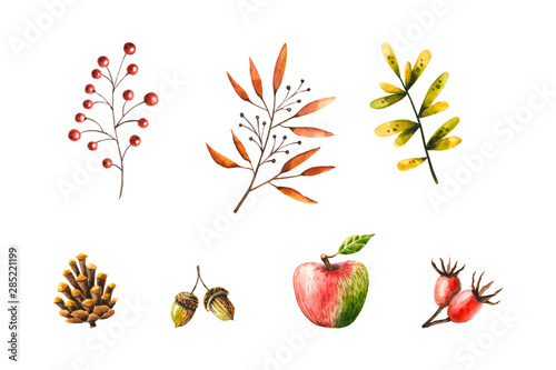 Plakaty botaniczne   plakat-na-wymiar-watercolor-autumn-set-of-leaves-rosehip-berries-acorn-cone-rowan