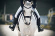 A rider in black boots in the stirrups sits astride a gray horse that walks calmly through the arena