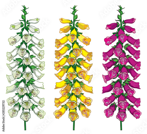 Photo Set of outline toxic Digitalis or foxglove flower bunch with bud in purple, yellow and pastel white isolated on white background