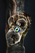 Creative Ring With Dragon Eye On Nature Background
