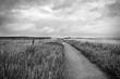 canvas print picture - Weg an der Nordseeküste bei Nebel, Insel Amrum