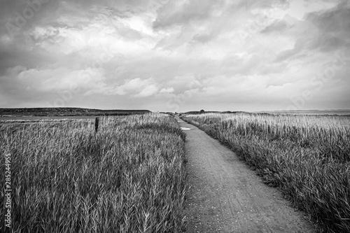 Fotografie, Obraz  Weg an der Nordseeküste bei Nebel, Insel Amrum
